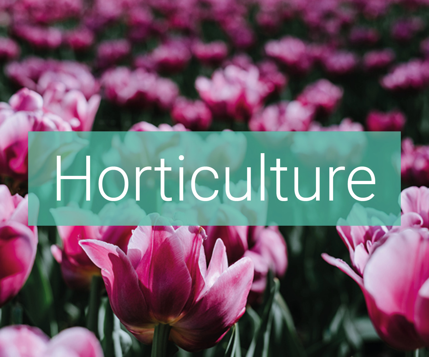 applications surface horticulture